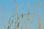 Birds - Assortment Of Perches - Manasquan Reservoir by Angie McKenzie