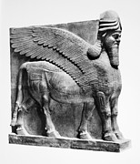 Relief Sculpture Photograph Prints - Assyria: Bull Scultpure Print by Granger