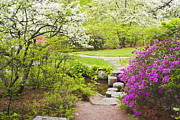 Stepping Stones Posters - Asticou Azelea Garden In Spring Photograph Poster by Keith Webber Jr