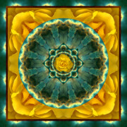 Meditative Framed Prints - Astral Rose Framed Print by Bell And Todd