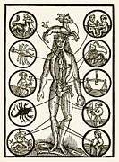 Signs Of The Zodiac Prints - Astrology And Medicine, Artwork Print by Detlev Van Ravenswaay