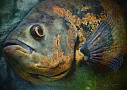 Tropical Fish Mixed Media Posters - Astronotus Poster by Neal Wiseman
