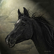 Photomanipulation Metal Prints - Aswad Metal Print by Karen Slagle