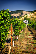 Vineyard Scene Prints - At Home on the Vineyard Print by Vicki Jauron