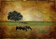 Country Scenes Metal Prints - At Pasture Metal Print by Jan Amiss Photography