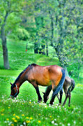 Grazing Horse Photo Posters - At Peace Poster by Emily Stauring