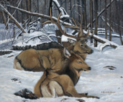 Patricia Mansell - At Rest - Elk