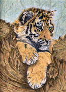 Tiger Print Framed Prints - At Rest Framed Print by Karen Curley