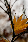 Colorful Leaves Prints - At Rest Print by Mike Reid