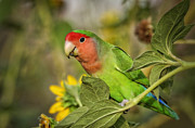 Lovebird Photos - At the End of the Rainbow  by Saija  Lehtonen