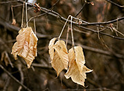 Fall Leaves Photo Originals - At The End We Rest by James Steele
