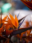 Bird Of Paradise Prints - At the Flower Market Print by Mike Reid