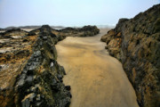 Oregon Beach Photos - At the Tidepool by Bonnie Bruno