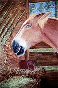 Donkey Pastels Prints - At the Trough Print by Jan Amiss