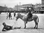 1901 Photo Posters - Atlantic City: Donkey Poster by Granger