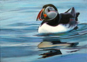 Puffin Drawings Posters - Atlantic Puffin 1 Poster by Kelly McNeil