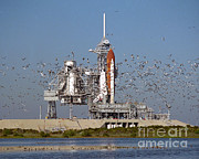 Atlantis Framed Prints - Atlantis On Launchpad Framed Print by Nasa