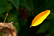 Yellow Leaf Photos - Atres 8 by Karol  Livote