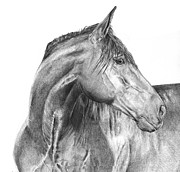 Horses Drawings - Attention Seeker by Dana Lysons