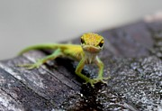 Theresa Willingham Metal Prints - Attitudinous Anole Metal Print by Theresa Willingham