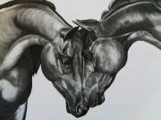 Horse Drawings - Attraction by Julie Hamilton
