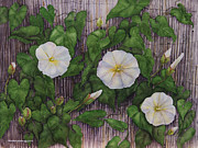 White Flowered Paintings - Audrey III by Nancy Pahl