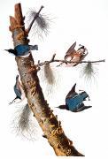Audubon: Nuthatch Print by Granger