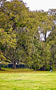 Dog Walking Photo Prints - Audubon Park 2 Print by Steve Harrington