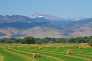 Hay Bales Framed Prints - August Hay Boulder County Colorado Framed Print by James Bo Insogna