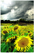 Gina Signore Framed Prints - August storm Framed Print by Gina Signore
