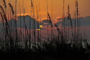 Sea Oats Prints - August sunset Print by David Lee Thompson