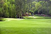 Golden Photos - Augusta National Golf Club Amen Corner by Phil Reich