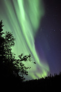 Aurora Borealis Above The Trees Print by Jiri Hermann