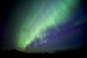 Alberta Photos - Aurora Borealis Over Chip Lake by Zoltan Kenwell