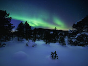 Evergreen Trees Photo Posters - Aurora Borealis Over Forramarka Woods Poster by Arild Heitmann