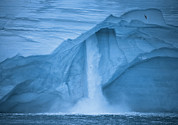 Ice Cap Framed Prints - Austfonna Ice Cap Melting Framed Print by Paul Nicklen