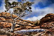 Wendy White Acrylic Prints - Australia Landscape 5 Acrylic Print by Wendy White