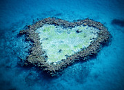 Heart Reef Framed Prints - Australia, Queensland, Great Barrier Reef, Heart Reef Framed Print by Anthony Johnson