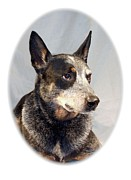 Australian Cattle Dog 1254 Print by Larry Matthews