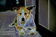 Puppies Digital Art Posters - Australian Cattle Dog Boxer Mix Poster by One Rude Dawg Orcutt