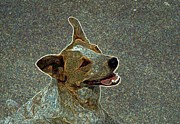 Puppies Digital Art Posters - Australian Cattle Dog Mix Poster by One Rude Dawg Orcutt