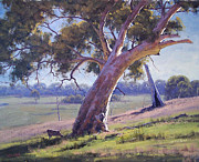 Eucalyptus Paintings - Australian Eucalyptus tree by Graham Gercken
