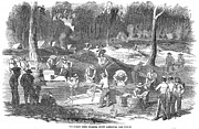 1851 Photos - Australian Gold Rush, 1851 by Granger