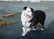 Pet Portraits Acrylic Prints - Australian Shepard Border Collie by Enzie Shahmiri