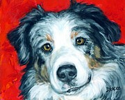Australian Animal Framed Prints - Australian Shepherd Blue Merle Aussie on red Framed Print by Dottie Dracos