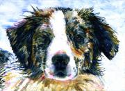 Family Member Posters - Australian Shepherd JAKE Poster by John D Benson