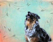 Australian Animal Framed Prints - Australian Shepherd with Butterflies Framed Print by Jai Johnson