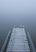 Y120831 Art - Austria, Seagull On Jetty With Mondsee Lake by Westend61