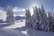 Styria Photos - Austria, Styria, View Of Snow Covered Firs On Gasslhohe Mountain by Westend61