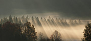 Y120831 Art - Austria, Sunbeam On Foggy Forest During Autumn by Westend61